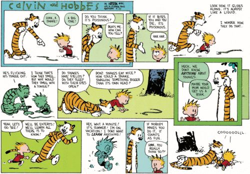 Image result for calvin and hobbes learning over the summer