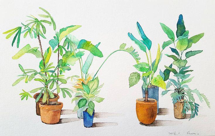 새해 복 많이 받으세요. 초록초록한 한해가 되시길...🌿 올리고 보니 싸인에 무의식적으로 2016 .. 😂😂 이래서 싸인은 연필로 해야됩니다✏ #nonameillustrator #illust #illustration #painting #watercolor #일러스타그램 #일러스트 #페인팅 #손그림 #수채화 #flowerstagram #flower #plants #꽃 #꽃스타그램 #꽃그림 #식물