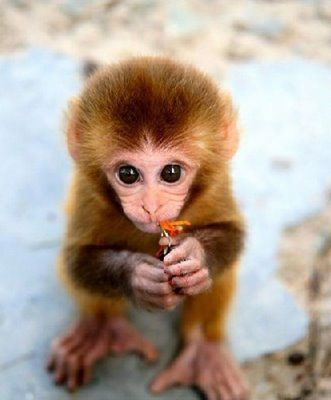 hehe: Baby Monkey, Cute Baby, Animal Baby, Cute Things, So Cute, Pet, Baby Animal, Cute Monkey, Flower