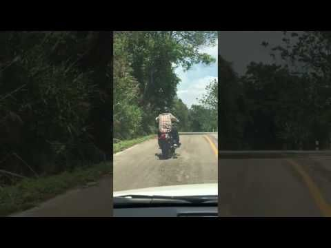 You'd think that the chances of being bit by a snake while taking a leisurely drive on a motorcycle would be pretty low. Maybe not so much in Lampang, Thailand.A biker driving down a street was forced to swerve at the last second to avoid a snake hanging out in the middle of the road. Just as he pass