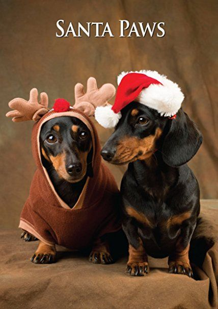 Miniature Dachshunds Christmas Card. Large Seasonal Greeting Card with Scarlet Envelope. Perfect for Dog Lovers