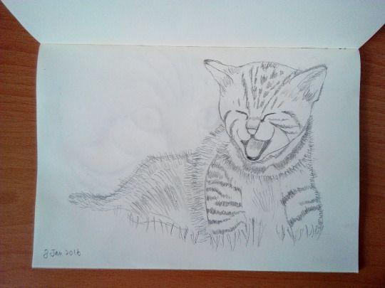 Cat sketching practice #002