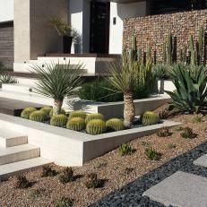 Gabion Wall and Drought Friendly Plants in Southwester Landscape Design cactus