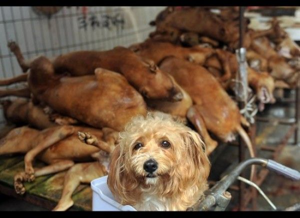 Quick links to share the petition: Oppose dog meat consumption in Switzerland! | Yousign.org