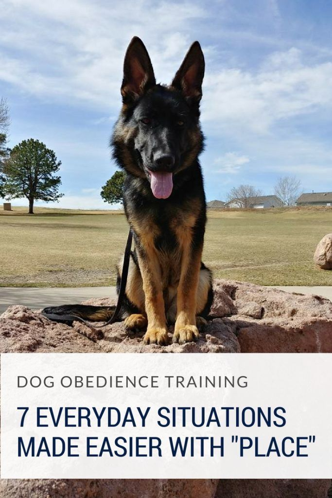 7 Place Commands For Your Dog Dog Training Classes Dog