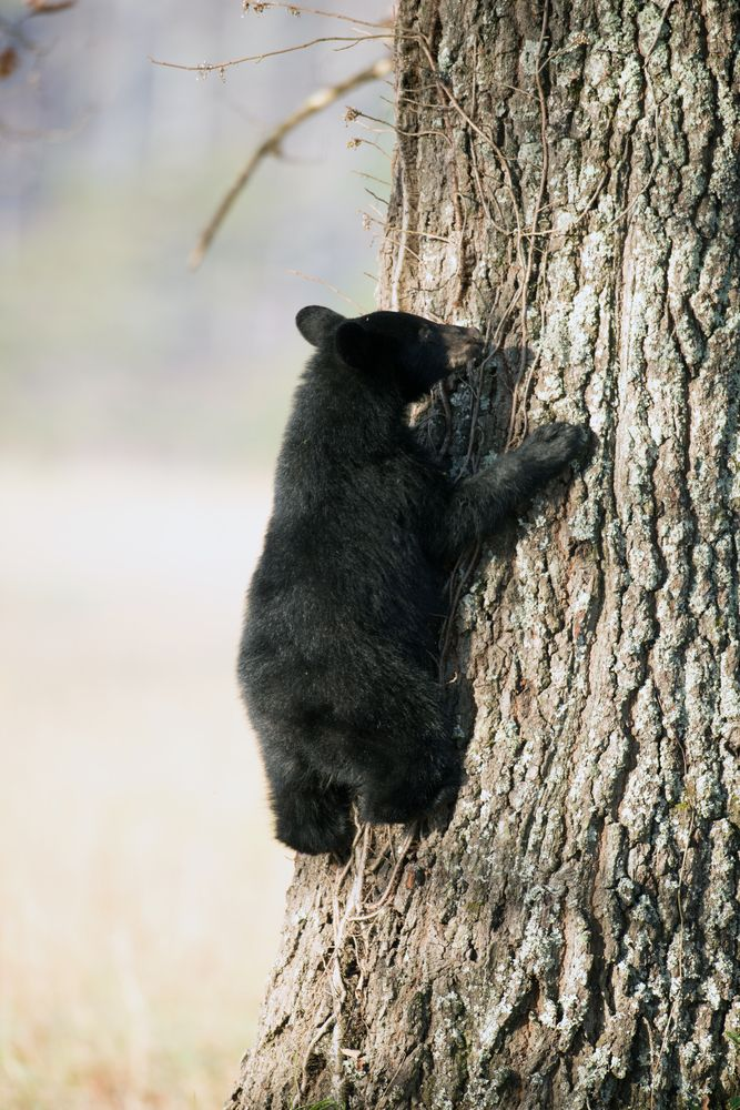 63 Best Images About Langley Bears Cuties On Pinterest