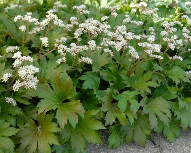 Image Result For Gardens Inc Flower Patterns