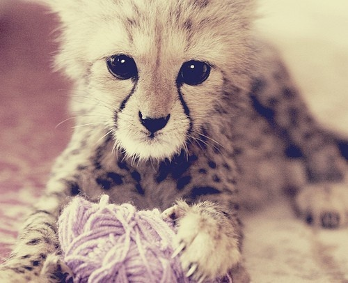 kitten playing with yarn... dang, those things are cute!!!