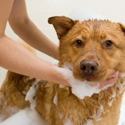 49 best pet grooming tips images on pinterest pet grooming your youre not the only one who can appreciate a day of relaxing treatments solutioingenieria Gallery
