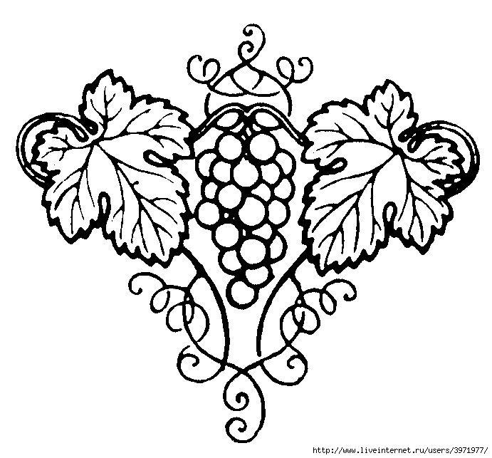 узор виноград картинки есть
