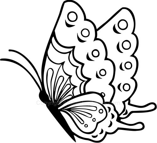 Butterfly Drawing Side View Photos