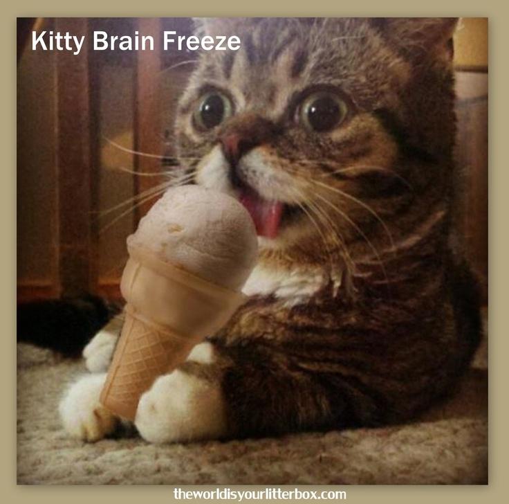 Do Cats Get Brain Freeze