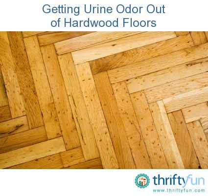 Cleaning Pet Urine Odor From Hardwood Floors