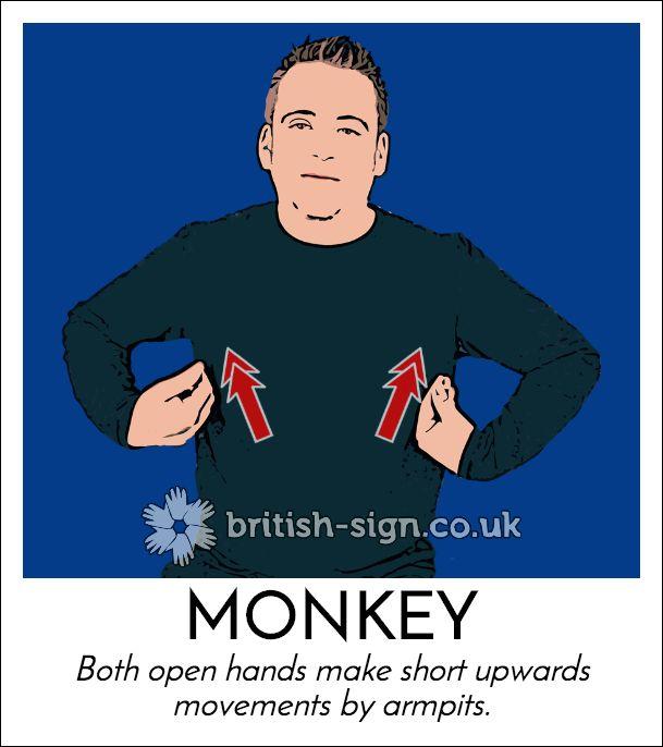 Today's #BritishSignLanguage sign is: MONKEY #MonkeyDay