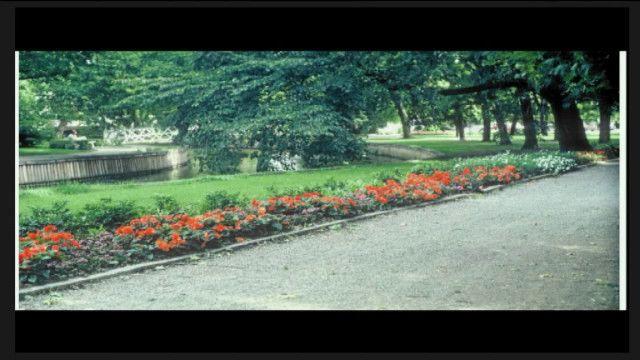 UR Samtiden - Perenner för park och trädgård: Från Drömparken till Skärholmens perennpark