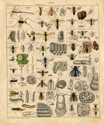 Free printable vintage insect art