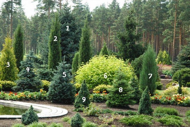 ornamental plants,landscape design,conifers,trees,shrubs,plants,fruit,ornamental plants,ornamental plants