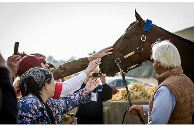 397 Best American Pharoah Images On Pinterest Race