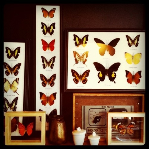 Lots of new framed butterflies in stock at Nest!