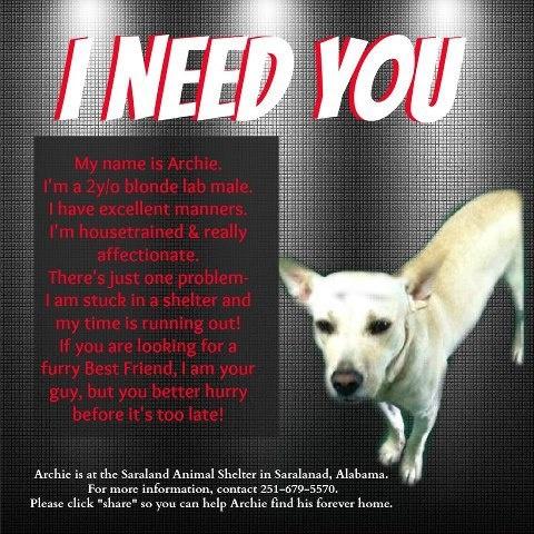 He needs you to help him find a home!Adoption Fosting, Adoption Pets, Helpful Adoption