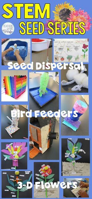 7 Unusual Things About Seeds That You Need to Know - Teachers Are Terrific!