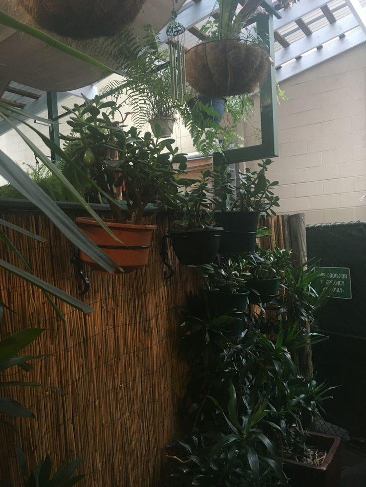 three monkeys cafe, brisbane, AUS