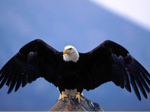 Stronger Scorpios have it in them to soar like an eagle, another image associated with this sign.