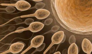 """Infertilidad Masculina: la fertilidad se puede """"Poner en Marcha"""" con una proteína"""