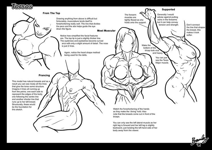 Tutorial: Torsos 3 by Bambs79 Muscular female anatomy comic or anatomical illustration female muscle growth buff bodybuilding
