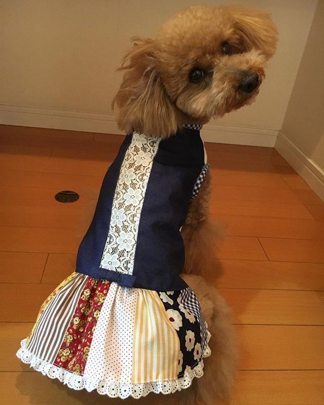 🐾🐾🐾🐾🐾 #いぬふく可愛い #いぬふくハンドメイド #いぬバカ部 #犬服手作り #犬服作り #ドッグウェア #dogwear #かわいい犬服 #いぬふく#といぷーどる #トイプードル可愛い #トイプ#いぬふく可愛すぎ #犬服販売#犬服ハンドメイド #犬服 #犬バカ部 #dogwear #犬のいる暮らし #犬スタグラム #犬がいないと生きていけない  #ドッグファッション#犬服製作 #犬服tシャツ#愛犬#エブリドッグ