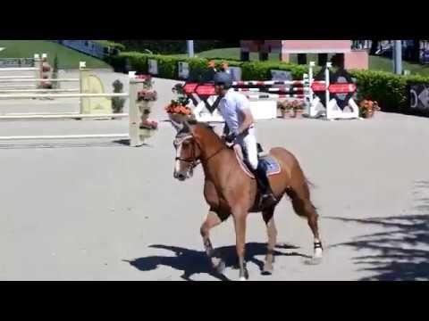 Grand Prix EuroHorse: Lincon Park E.H. - Grand Prix C145 - Equieffe Gorl...