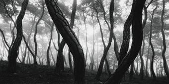 Bae Bien-U Pine Tree Series such great photographs!