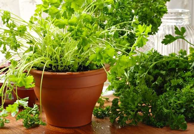 19MAR15 | Vegetables On Demand: How to Grow Edible Plants Indoors—Starting from Seeds!