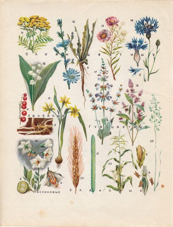 63 best botanical images on Pinterest   Nature tattoos, Tattoo ideas ...
