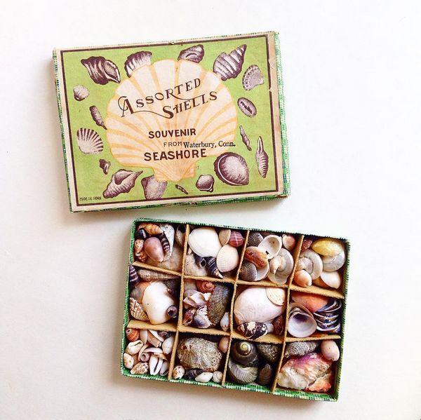 Assorted shells - Instagram: @koreanlemons