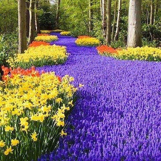 #Keukenhof, #Holland, World's #LargestFlowerGarden #travel #traveleze #traveling #holiday #holidays