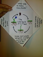 Interactive Biology Notebooking~ parts of a plant foldable