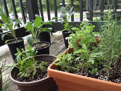 This post talks about starting a balcony herb garden, with suggestions for what to plant and what supplies you'll need for small-space gardening.
