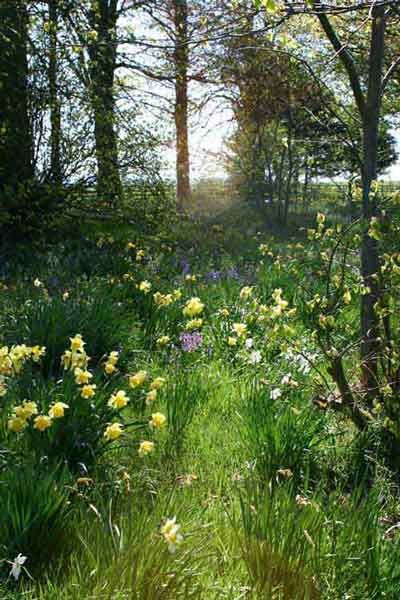 Woodland walk = Inspiration