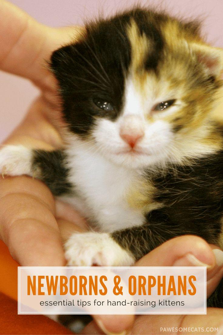best 25 newborn kittens ideas on pinterest kittens cutest baby