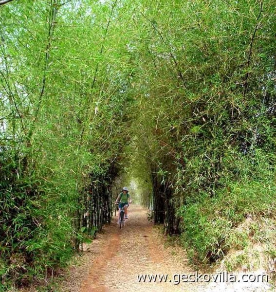The bamboo driveway to Gecko Villa holiday rental in the countryside in north east Thailand.