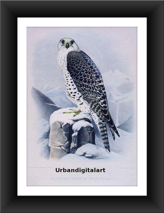 Eagle In The Winter-Downloadable Vintage  Art by UrbanDigitalArt