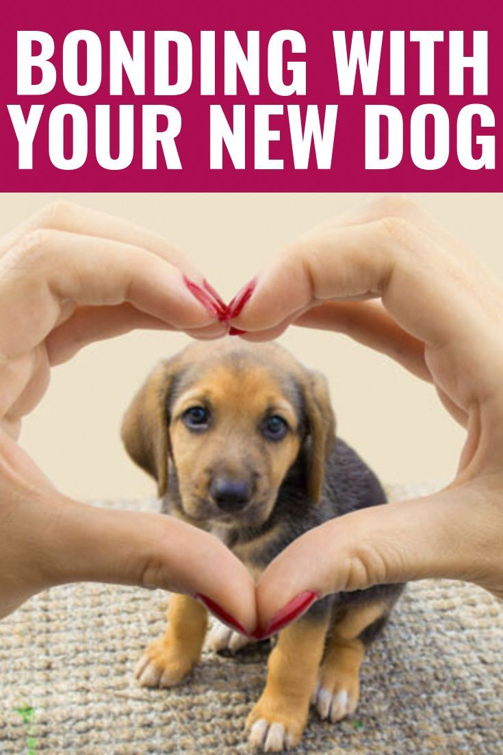Dog Command Tricks Bonding With Your New Dog New Dog Tips
