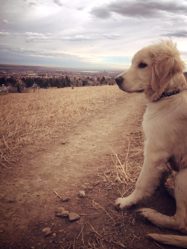 Handsome dog Süße hunde welpen