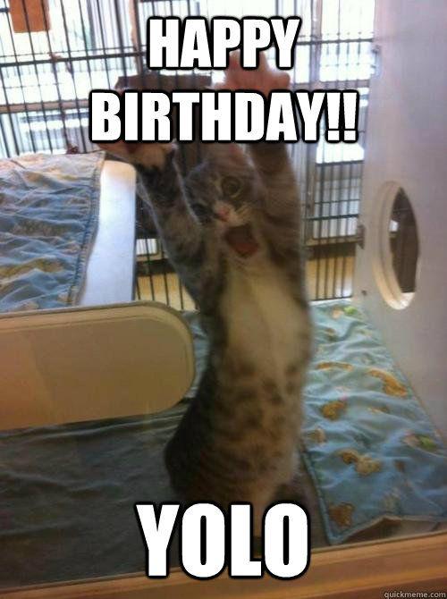 Funny Birthday Meme Cat : Best cat birthday meme images on pinterest birthdays