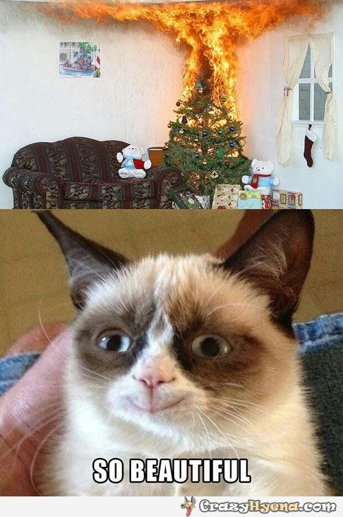 Finally this cat is happy. Funny Christmas tree on fire.