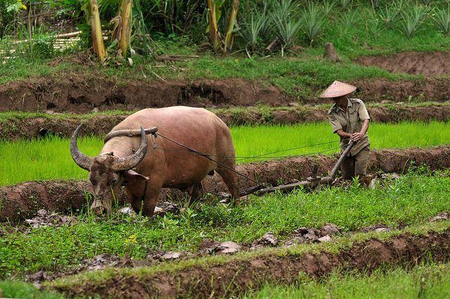 Denne ultimative rundrejse igennem Laos er skræddersyet til dem, der ønsker at få et dybdegående indblik i de lokales kultur og opleve en fantastisk uberørt natur. I vil opleve det bedste af Laos, i et roligt tempo, hvor der er tid til at fordybe sig. Som I begiver jer igennem dette utrolige smukke land, vil I møde en imødekommende lokalbefolkning, opleve minoritets landsbyer, Bolaven plateauet, jungletrekking, lerkrukke sletten, Khmer ruiner, de 4000 øer, storslåede vandfald og…