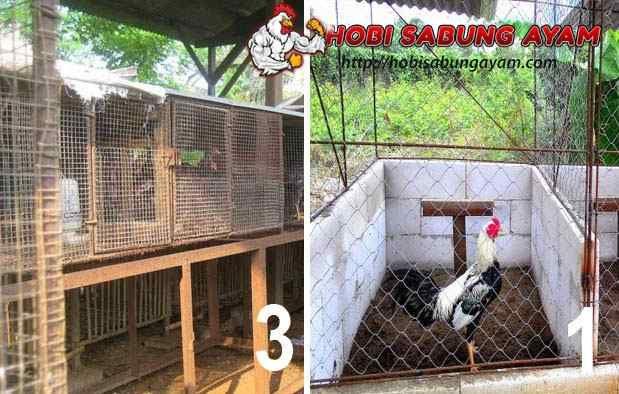 Gambar Kandang Ternak Ayam Bangkok