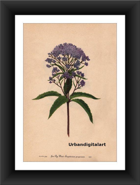 Joe-Rye WeedDownloadable Vintage  Art Print by UrbanDigitalArt