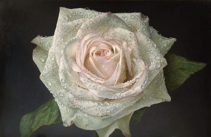 Delicate-hyper-realistic-paintings-of-roses-by-Gioacchino-Passini-06.jpg (740×481)